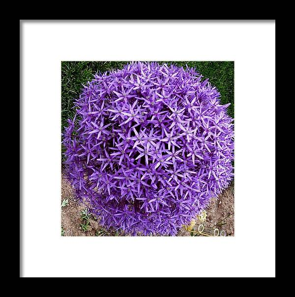 Flower Framed Print featuring the photograph Purple Globe by Jeanette Oberholtzer