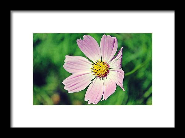 Flower Framed Print featuring the photograph Purple Perfection by Amelia Saldarriaga