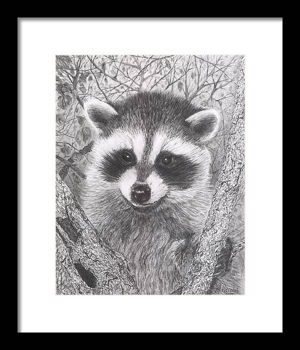 Raccoon Framed Print featuring the drawing Raccoon Kit by Marlene Piccolin