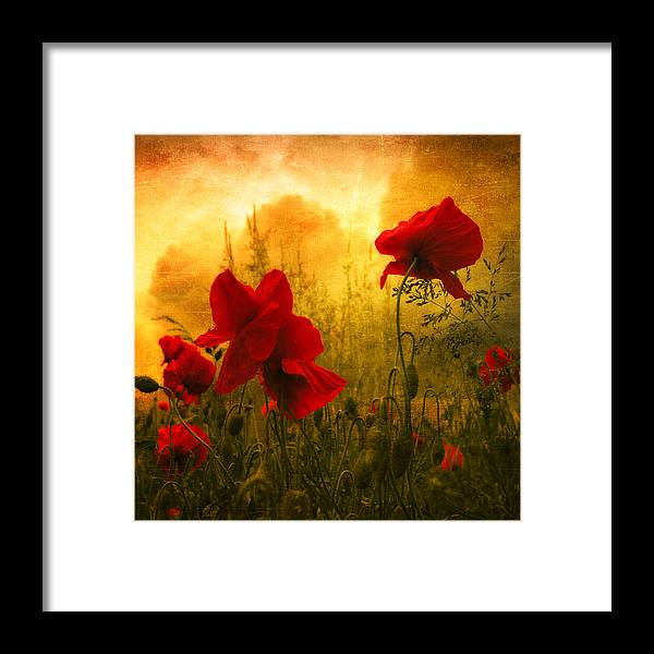 Poppies Framed Print featuring the photograph Red For Love by Philippe Sainte-Laudy