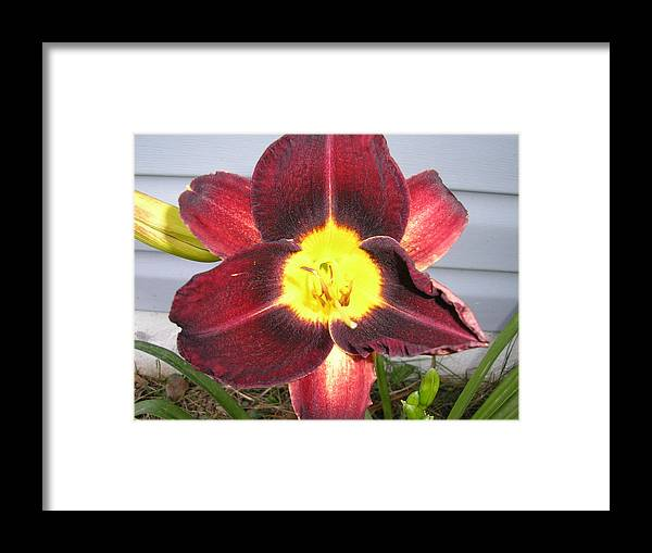 Lily Framed Print featuring the pyrography Red Lily by Tina Antoniades