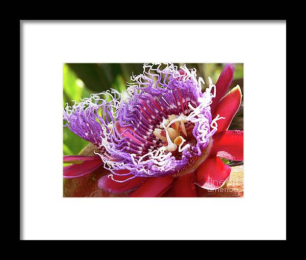 Flower Framed Print featuring the photograph Red Lotus by Angela Wright