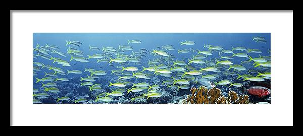 Animal Framed Print featuring the photograph Reef Scene by Alexander Semenov