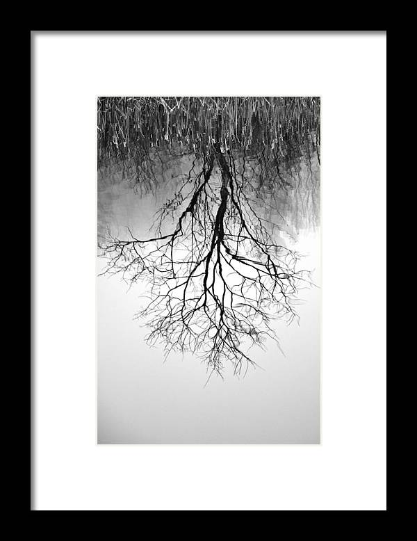 Tree Framed Print featuring the photograph Reflection by Lisa Kane