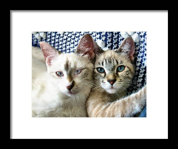 Cat Framed Print featuring the photograph Rescued And Spoiled by Kristin Elmquist