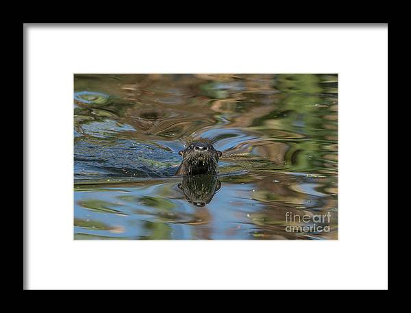 Usa Framed Print featuring the photograph River Otter by Brian Kamprath