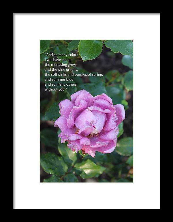Rose-15 Framed Print featuring the photograph Rose-15 by Anand Swaroop Manchiraju