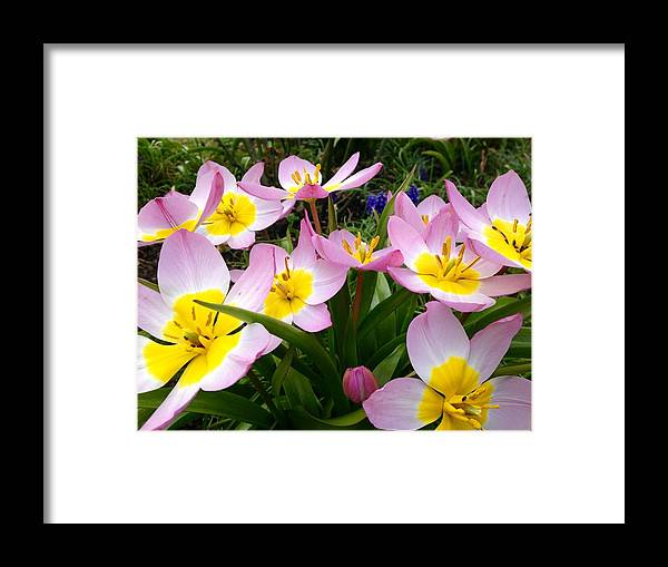 Framed Print featuring the photograph #1 by Rosie Knightley
