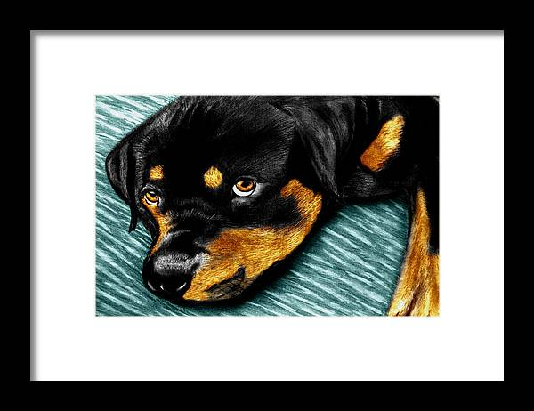 Rot Wilier Framed Print featuring the drawing Rotty by Peter Piatt