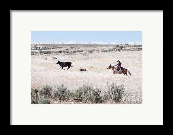 Cowboy Framed Print featuring the photograph Round Up by Cindy Singleton