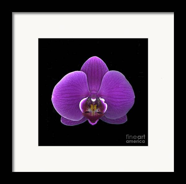 Beauty Framed Print featuring the photograph Royalty by Christian Slanec