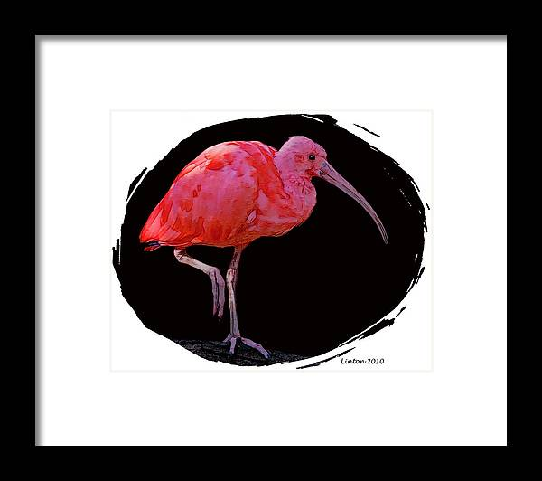 Scarlet Ibis Framed Print featuring the digital art Scarlet Ibis by Larry Linton