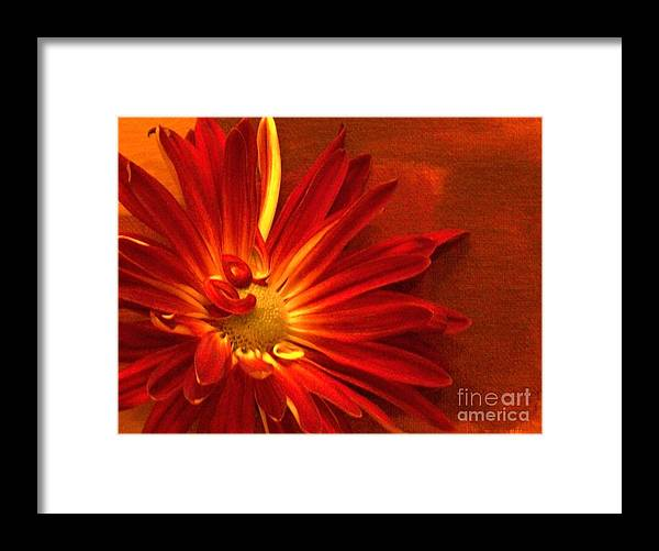 Photo Framed Print featuring the photograph Scarlet by Marsha Heiken
