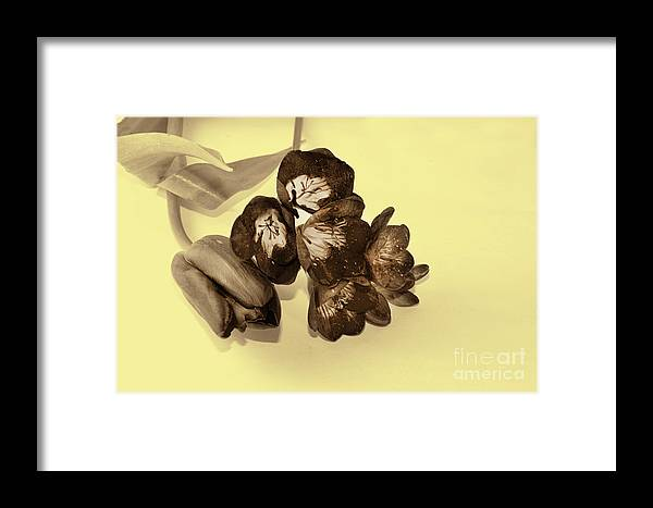 Flowers Framed Print featuring the photograph Sepia Flowers by Elvira Ladocki