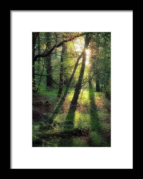 Trees Framed Print featuring the photograph Shining Through by David Lamb