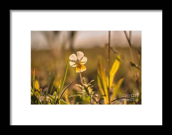 Siesta Framed Print featuring the photograph Siesta by Lyudmila Prokopenko