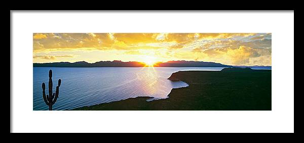 Photography Framed Print featuring the photograph Silhouette Of Lone Cardon Cactus Plant by Panoramic Images