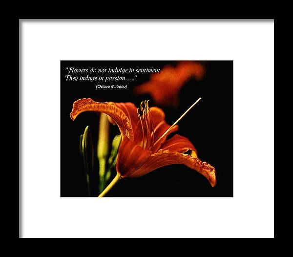 Lily Framed Print featuring the photograph Single Tiger Lily Poster by Roger Soule