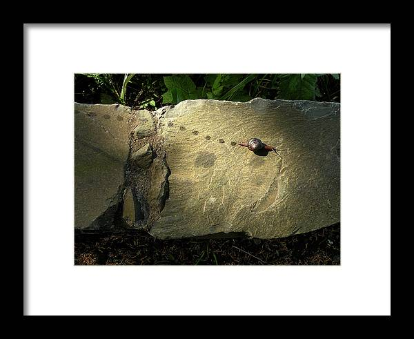 Snail Framed Print featuring the photograph Snail Trail by Lindy Pollard