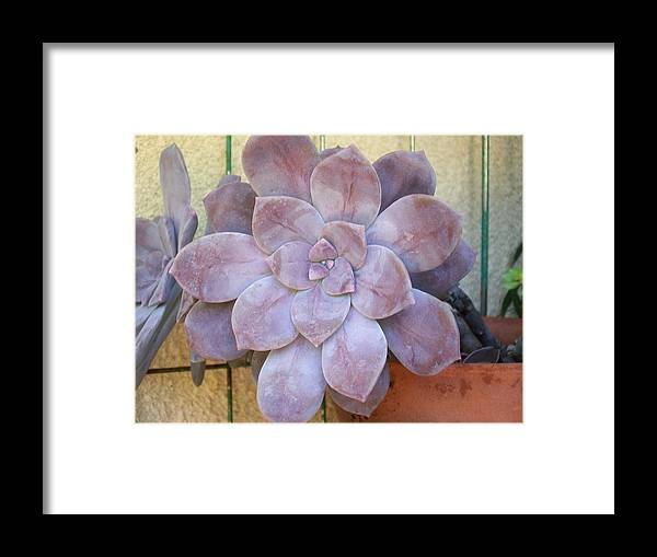 Stone Framed Print featuring the photograph Stone Flower by Laurette Escobar