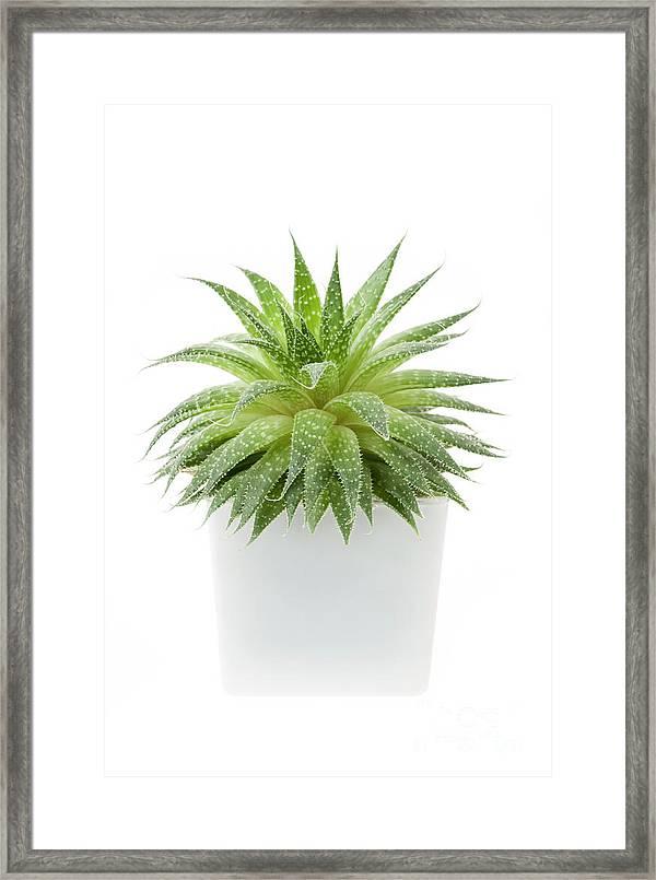 Succulent Plant Framed Print By Elena Elisseeva