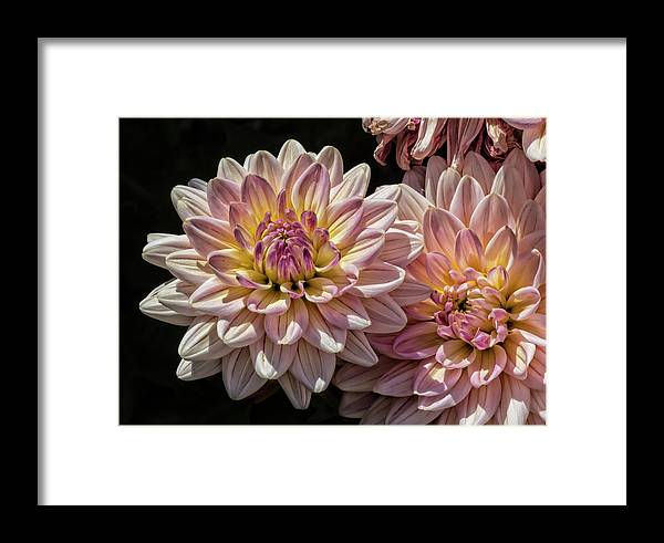 Nature Framed Print featuring the photograph Sun And Flowers by Robert Ullmann