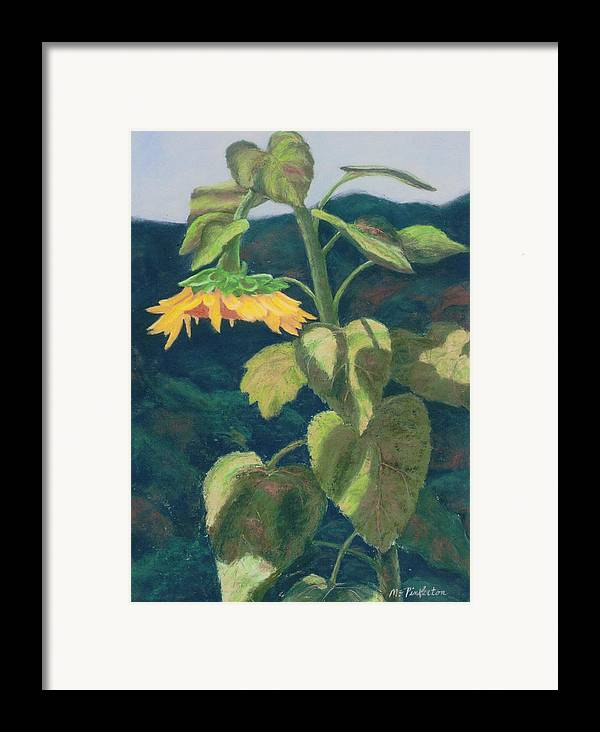 Flower Framed Print featuring the painting Sunflower by Miriam Pinkerton