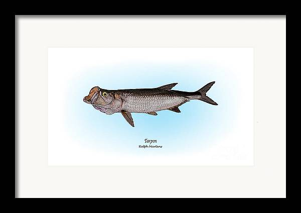 Tarpon Framed Print featuring the painting Tarpon by Ralph Martens