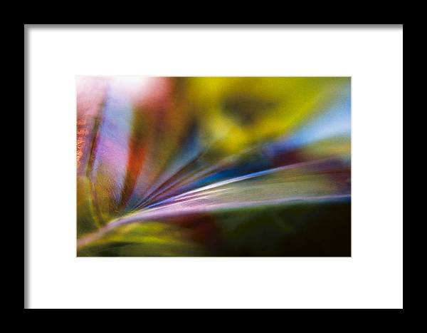 Tarragon Framed Print featuring the photograph Tarragon Tertiary by Shawn Young