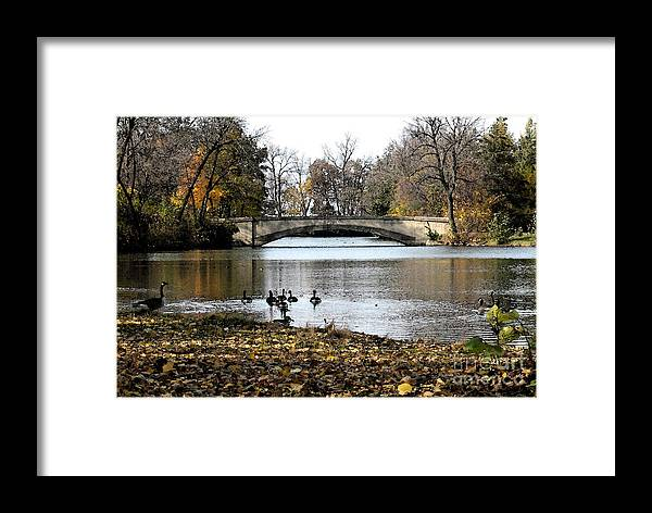 Nature Framed Print featuring the photograph Tenney Park by Gary Everson