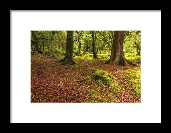Ardgartan Forest Framed Print featuring the photograph The Ardgartan Forest by Len Brook
