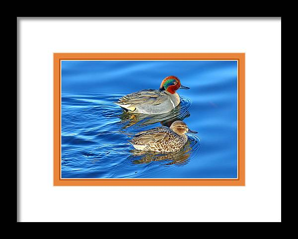 Green Winged Teal Framed Print featuring the photograph The Couple by BYETPhotography