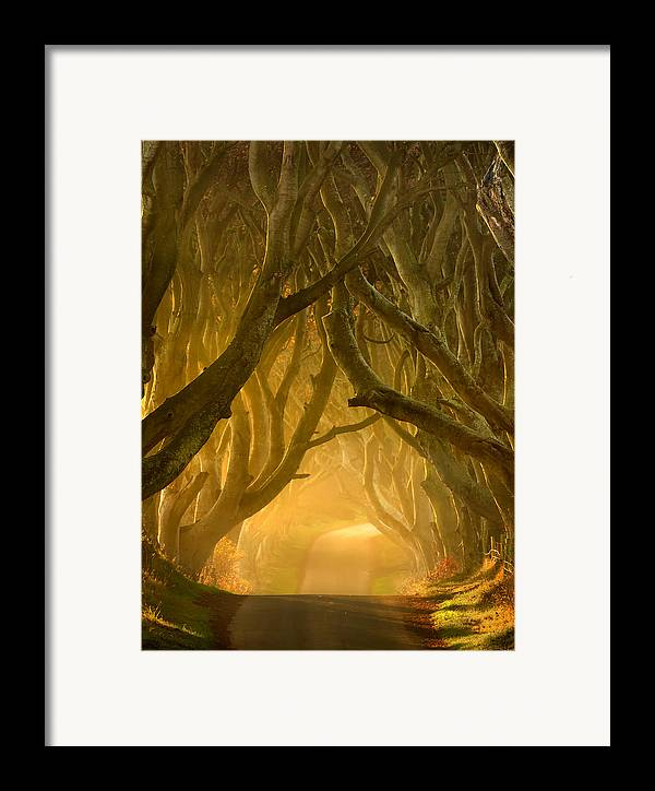 Antrim Framed Print featuring the photograph The Dark Hedges IIi by Pawel Klarecki