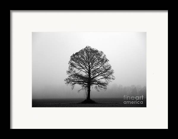 Tree Framed Print featuring the photograph The Tree by Amanda Barcon