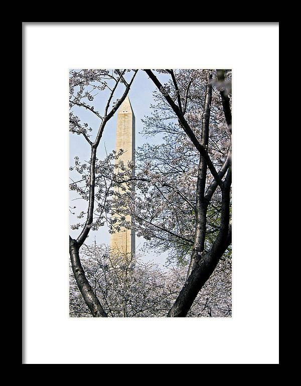Blossoms Framed Print featuring the photograph Thoughts by Mitch Cat