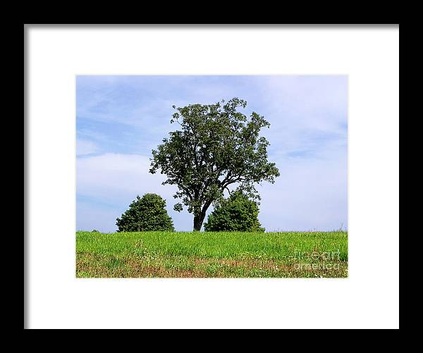 Tree Framed Print featuring the photograph Three Tree Hill by Madeline Ellis
