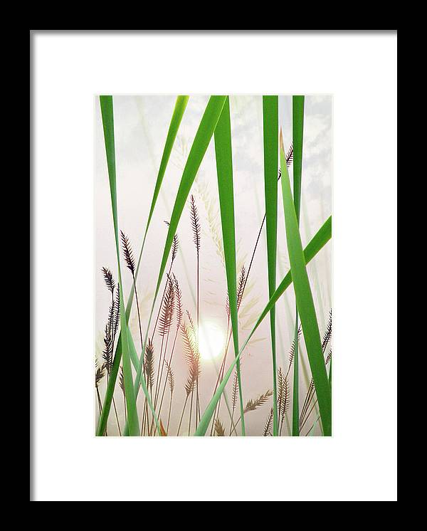 Tall Grass Framed Print featuring the photograph Through The Looking Grass by John Poon