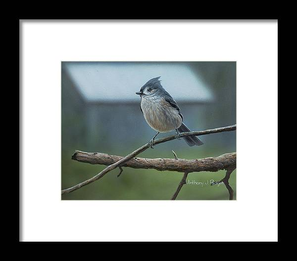 Titmouse Framed Print featuring the painting Titmouse by Anthony J Padgett