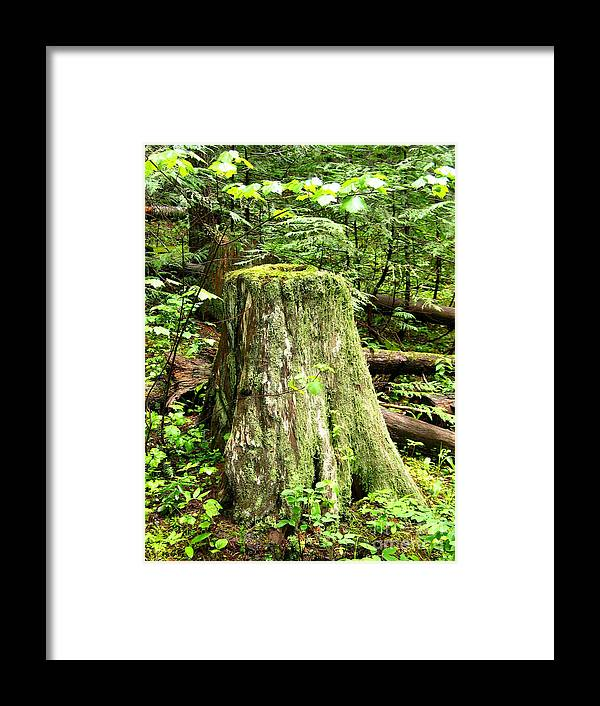 Moss Framed Print featuring the photograph Transition by Idaho Scenic Images Linda Lantzy