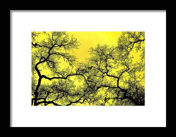 Digital Art Framed Print featuring the photograph Tree Fantasy 18 by Lee Santa