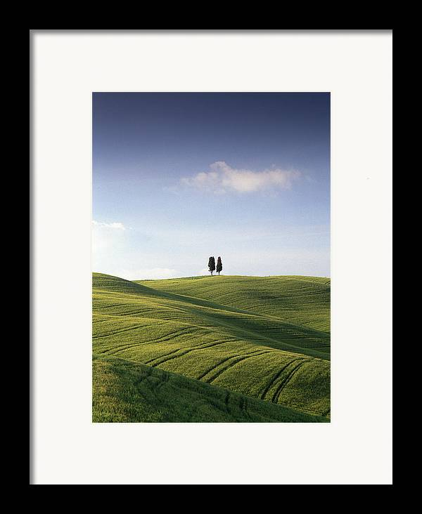 Photograph Framed Print featuring the photograph Twin Cypresses by Michael Hudson