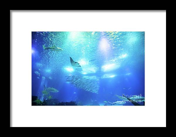 Underwater Framed Print featuring the photograph Undersea Deep Background by Benny Marty