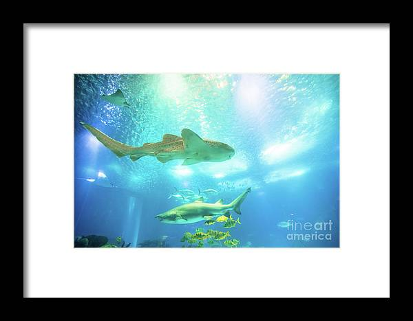 Underwater Framed Print featuring the photograph Undersea Shark Background by Benny Marty
