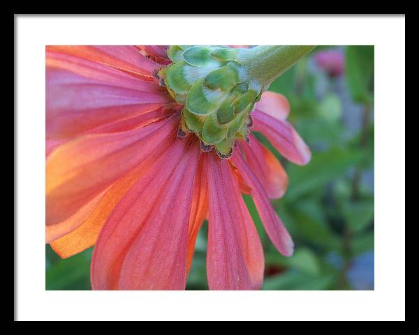 Flower Framed Print featuring the photograph Unseen by Sally Engdahl