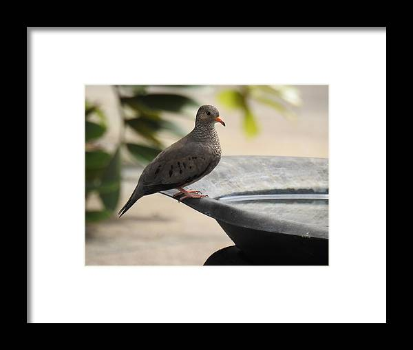 Dove Framed Print featuring the photograph Untitled by Laura Knechtel