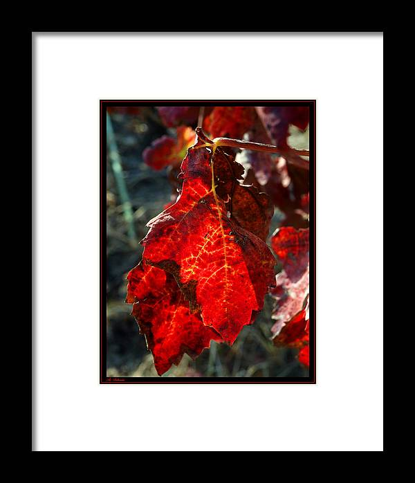Vine Framed Print featuring the photograph Vine Leaf At Fall by Arik Baltinester
