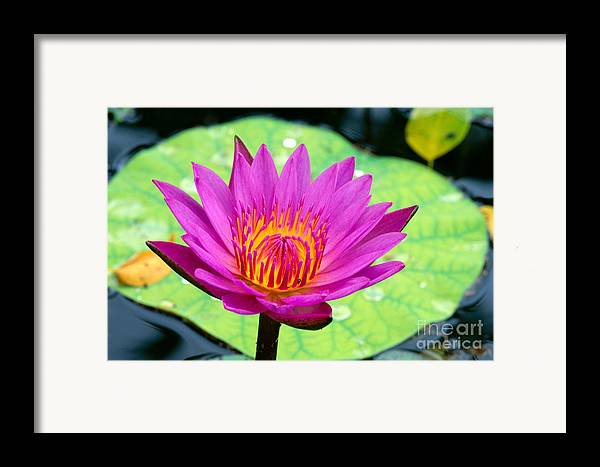 Afternoon Framed Print featuring the photograph Water Lily by Bill Brennan - Printscapes