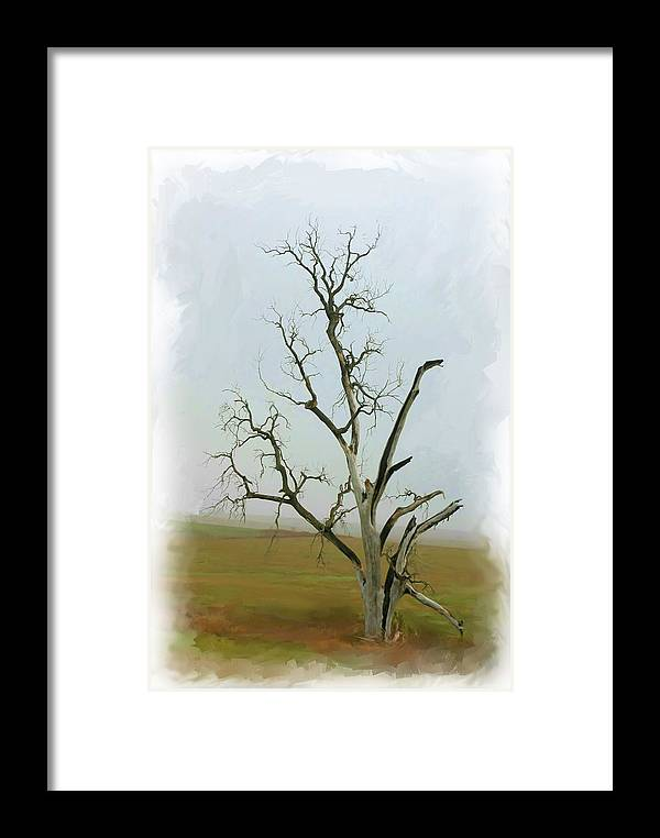 Tree Framed Print featuring the photograph Weathered by Jim Darnall