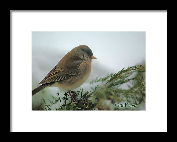 Bird Framed Print featuring the photograph Weathering The Storm by Chuck Kugler