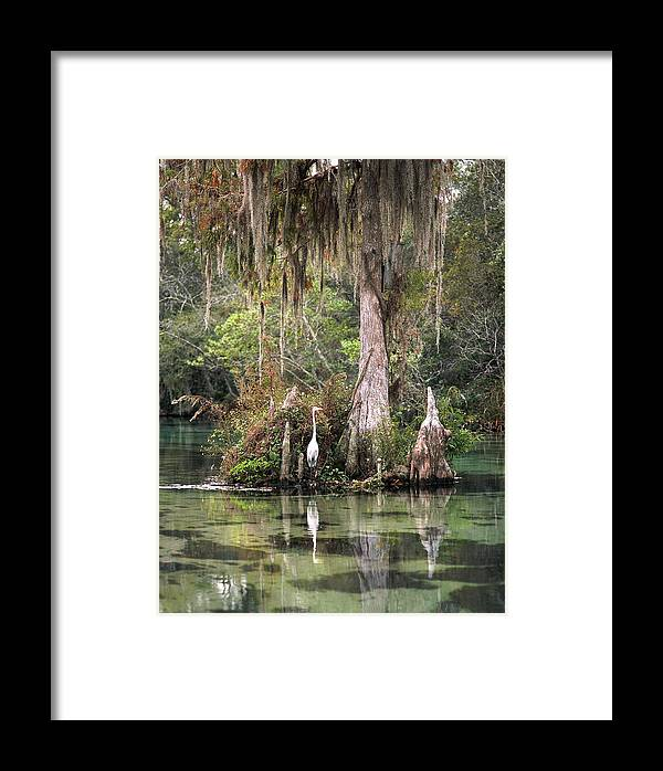 Weeki Wachee Framed Print featuring the photograph Weeki Wachee River by Steven Sparks
